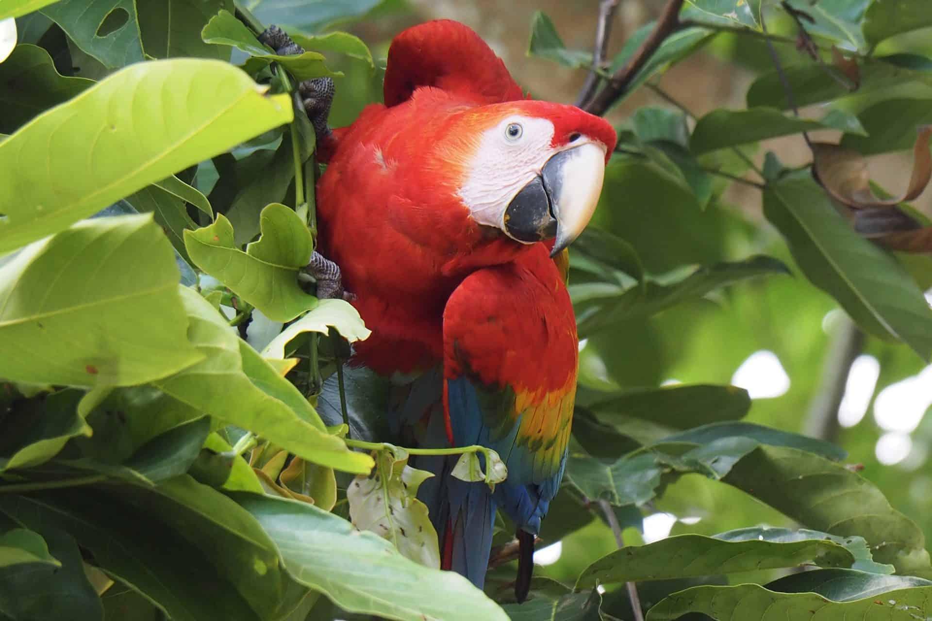 Viaggio in Colombia Amazonia Ara