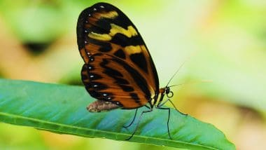Farfalle spettacolari