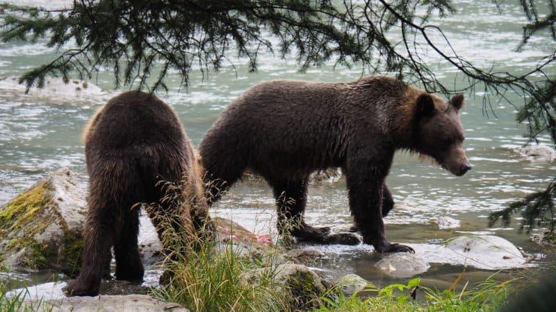 Orsi in Alaska