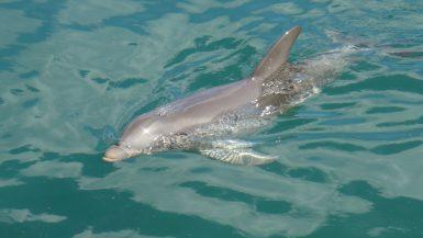Cavalcare un delfino